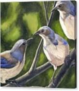 Three Jays Canvas Print