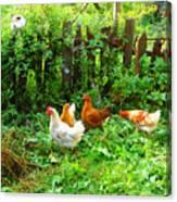 Three Kokas Full Colour Photograph Canvas Print