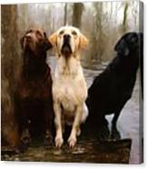 Three Labs Canvas Print