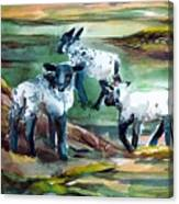Three Lambs Canvas Print