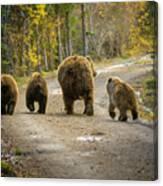 Bear Bums Canvas Print