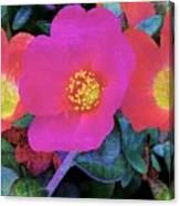 Three Lovely Flowers Canvas Print