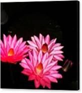 Three Night Lilies  Canvas Print