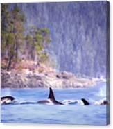 Three Orca Whales Canvas Print