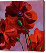Three Oriental Poppies Canvas Print