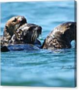 Three Otters Canvas Print