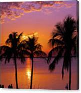 Three Palm Trees At Sunset Canvas Print