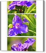 Three Photos For The Price Of One  Canvas Print