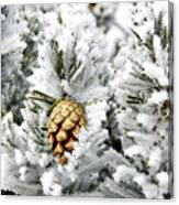 Three Pinecones Canvas Print