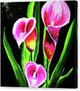 Three Pink Calla Lilies. Canvas Print