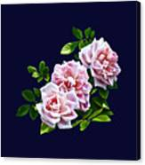 Three Pink Roses With Leaves Canvas Print