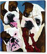 Three Playful Bullies Canvas Print