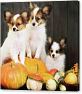 three puppy with pumpkin by Iuliia Malivanchuk Canvas Print