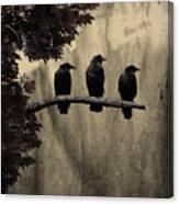 Three Ravens Branch Out Canvas Print