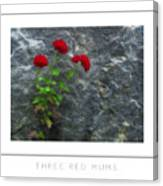 Three Red Mums Poster Canvas Print