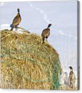 Three Roosters Canvas Print