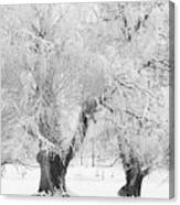 Three Snow Frosted Trees In Black And White Canvas Print