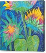 Three Sunflowers In The Mid Summer Night  Canvas Print