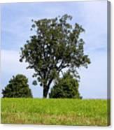 Three Tree Hill Canvas Print