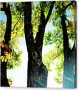 Three Tree Light Canvas Print