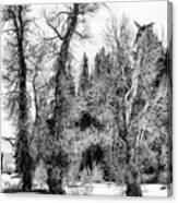 Three Trees Bw Canvas Print