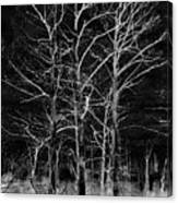 Three Trees In Black And White Canvas Print