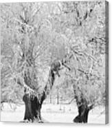 Three Trees In The Snow - Bw Fine Art Photography Print Canvas Print