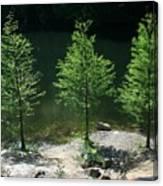 Three Trees Of Ohio Canvas Print