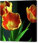 Three Tulips Photo Art Canvas Print