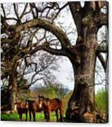 Three Under A Tree Canvas Print