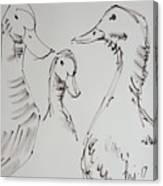 Three White Ducks Drawing Canvas Print