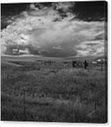Three White Horse And Corral Bw Canvas Print