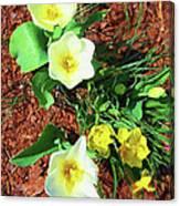 Three White Tulips Painting Canvas Print