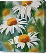 Three Wild Daisies Canvas Print