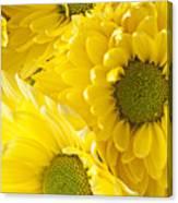Three Yellow Daisies  Canvas Print