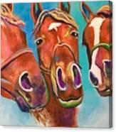 Threes Company Canvas Print