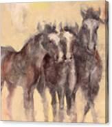 Through A Horses Ears Canvas Print