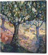 Through Ancient Olives Canvas Print