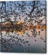 Through The Cherry Tree Canvas Print