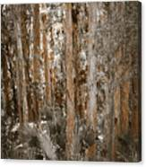 Through The Forest Trees Canvas Print