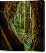 Through The Knothole Canvas Print