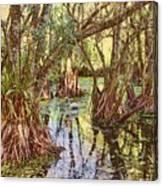 Through The Mangroves Canvas Print