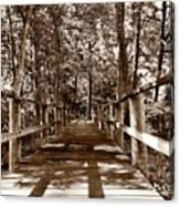 Through The Narrow Path  Canvas Print