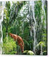 Through The Waterfall Canvas Print
