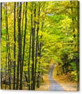 Through Yellow Woods Canvas Print