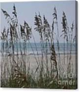 Thru The Sea Oats Canvas Print