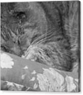 Thumbody Sleeping Canvas Print