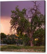 Thunderstorm In The Woods Canvas Print
