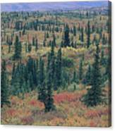 Tiaga Fall Colors, Tundra And Spruce Canvas Print