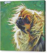 Tibetan Spaniel And Cabbage White Butterfly Canvas Print